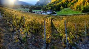 Panorama delle vigne di autunno in Svizzera Immagine Stock Libera da Diritti