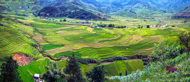 Panorama den terrasserade risfältsikten, Tu Le, Vietnam Royaltyfria Foton