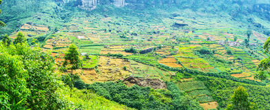 Panorama der Ackerlande Lizenzfreie Stockfotos