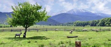 Panorama der Fagaras Berge Lizenzfreie Stockbilder