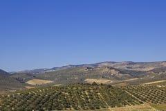 Panorama der Felder in Andalusien. Lizenzfreies Stockfoto
