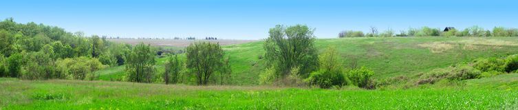 Panorama der grünen Blumenwiese Stockfotografie