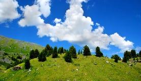 Panorama der Hügel mit Tannenbäumen Stockfotos