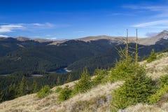 Panorama der Hügel mit Tannenbäumen Stockfotografie