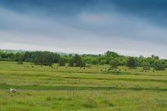 Panorama der ländlichen Wiese mit Waldfluß und -tieren Lizenzfreies Stockbild