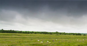 Panorama der ländlichen Wiese mit Waldfluß und -tieren Lizenzfreies Stockfoto