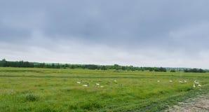 Panorama der ländlichen Wiese mit Waldfluß und -tieren Stockbild