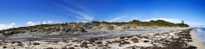 Panorama der Meerespflanze bedeckte Strand lizenzfreies stockbild