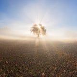 Panorama der sonnigen und nebeligen Landschaft Lizenzfreie Stockfotos