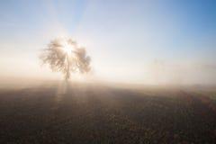 Panorama der sonnigen und nebeligen Landschaft Lizenzfreie Stockfotografie