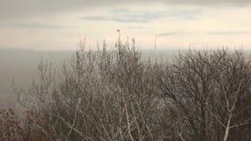 Panorama der Stadt hinter kahlen Bäumen stock video footage