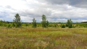 Panorama der Waldlandschaft stock video footage