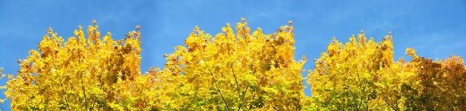 Panorama des arbres d'automne images stock
