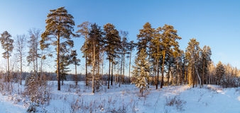 Panorama des bois neigeux, route, Russie, Ural Photographie stock