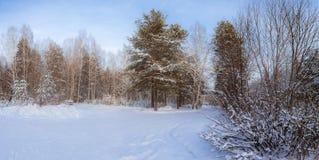 Panorama des bois neigeux, route, Russie, Ural Images libres de droits