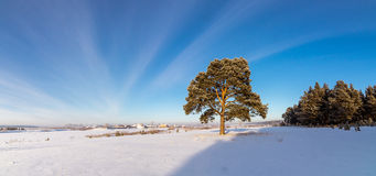 Panorama des bois neigeux, route, Russie, Ural Image libre de droits