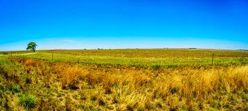 Panorama des breiten offenen Ackerlands entlang dem R39 in der Vaal-Flussregion von Süd-Mpumalanga Stockbilder