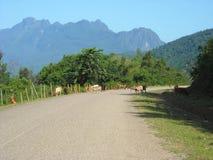 Panorama des collines verdoyantes en Asie du Sud-Est Image stock