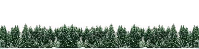 Panorama des gezierten Baumwaldes bedeckt durch frischen Schnee während der Winter-Weihnachtszeit