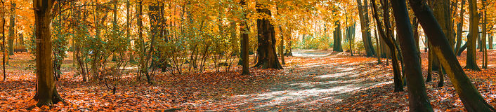 Panorama des Herbstes im Park in Bytom Lizenzfreie Stockbilder