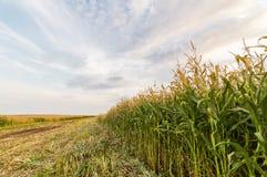 Panorama des landwirtschaftlichen Feldes am sonnigen Tag des Sommers Lizenzfreie Stockbilder