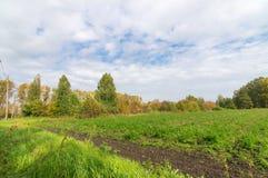 Panorama des landwirtschaftlichen Feldes am sonnigen Tag des Sommers Stockfotos