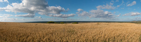 Panorama des Maisfeldes Stockbilder