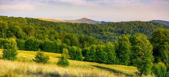 Panorama des montagnes carpathiennes boisées image libre de droits