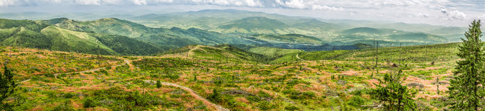 Panorama des moutons de montagne, Beskydy Image stock