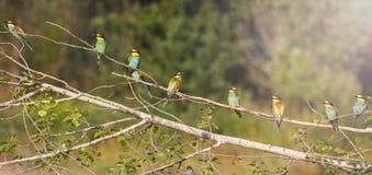 Panorama des oiseaux du paradis avec le point névralgique ensoleillé Photo stock