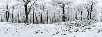 Panorama des schönen Winters forrest 360 Grad Stockfoto