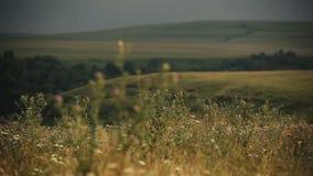 Panorama des Sommerfeldes in den Bergen bedeckt durch Grün landschaft betriebe stock video footage