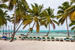 Panorama des Strandes und des karibischen Meeres mit Palmen Lizenzfreies Stockfoto