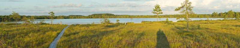 Panorama des Sumpfs lizenzfreies stockbild