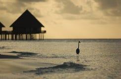 Panorama des tropischen Sonnenuntergangs Lizenzfreie Stockfotografie
