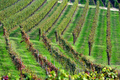 Panorama des vignobles Photo stock