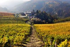 Panorama des vignobles d'automne en Italie Image stock