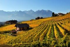 Panorama des vignobles d'automne en Suisse Photographie stock libre de droits