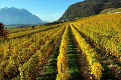 Panorama des vignobles d'automne en Suisse Images libres de droits