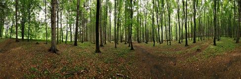 Panorama des Waldes Stockfotografie