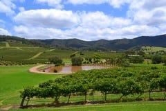 Panorama des Weinbergs mit Teich und Hügeln Lizenzfreies Stockfoto