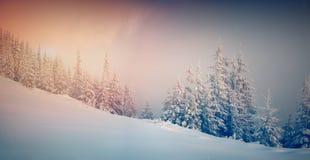 Panorama des Wintersonnenaufgangs im Gebirgswald Lizenzfreies Stockfoto