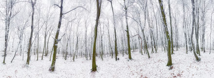 Panorama des Winterwaldes mit Schnee und Baum Lizenzfreie Stockfotografie
