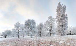 Panorama des Winterwaldes mit Schnee und Baum Lizenzfreie Stockfotos
