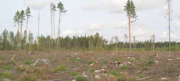 Panorama destruído da floresta Fotos de Stock Royalty Free