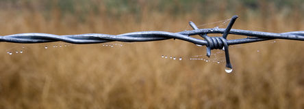 Panorama of dew on a fence. A panoramic image of dew drops on a barbed wire fence and spider webs Stock Photography
