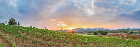 panorama di alba sopra il giacimento e la montagna della manioca Immagini Stock