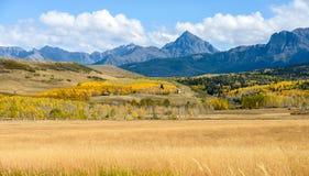 Panorama di Autumn Mountain Valley al Mt Sneffels Fotografia Stock Libera da Diritti