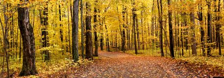 Panorama di autunno Immagine Stock