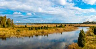 Panorama di autunno della canna gialla Immagini Stock Libere da Diritti